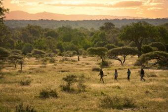 Bush walk through the Sabi Sands Game Reserve, South Africa.