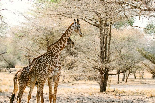 100 secret gems: Selous Game Reserve, Tanzania