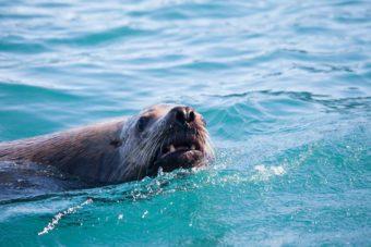 wildlife inside passage fauna
