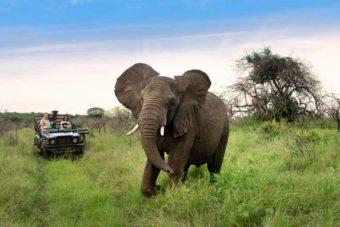 safari kids family wildlife africa